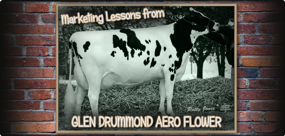 Marketing Lessons from Glen Drummond Aero Flower
