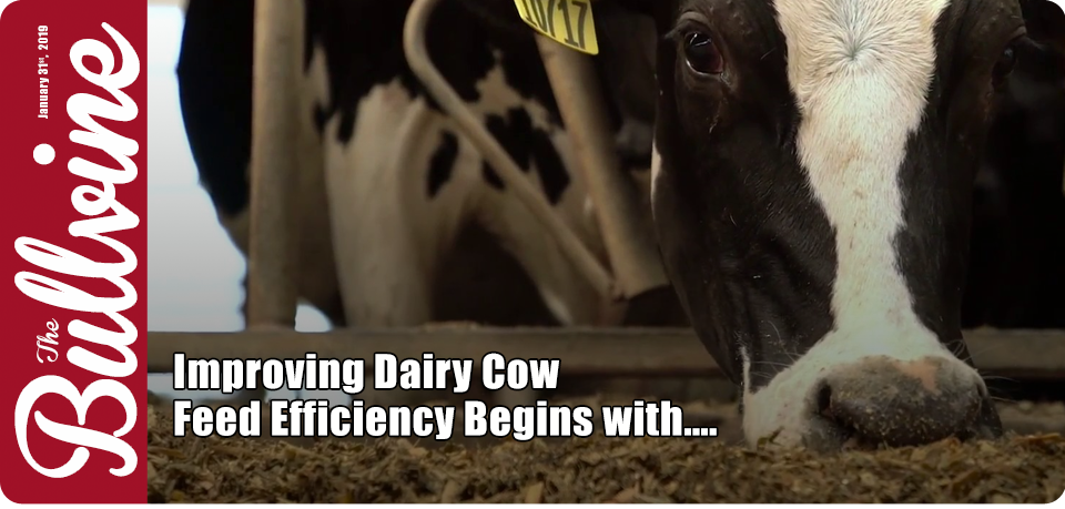 Improving Dairy Cow Feed Efficiency Begins with….