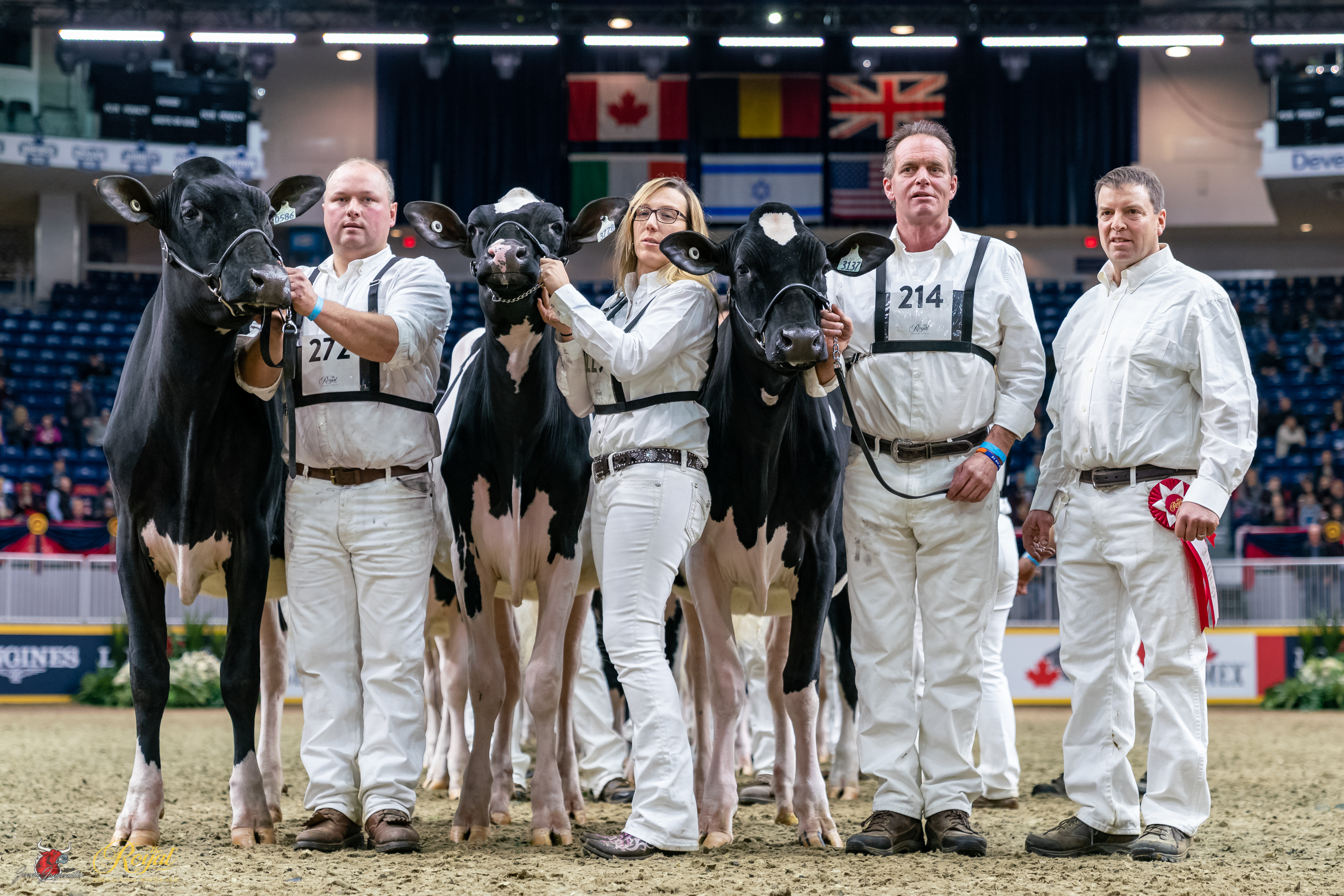 Canadian National Holstein Show 2019