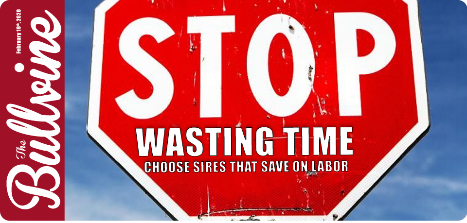 STOP WASTING TIME! Choose Sires that Save on Labor