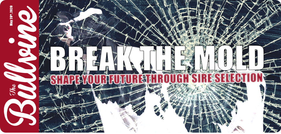 Break the Mold – Shape Your Future Through Sire Se…