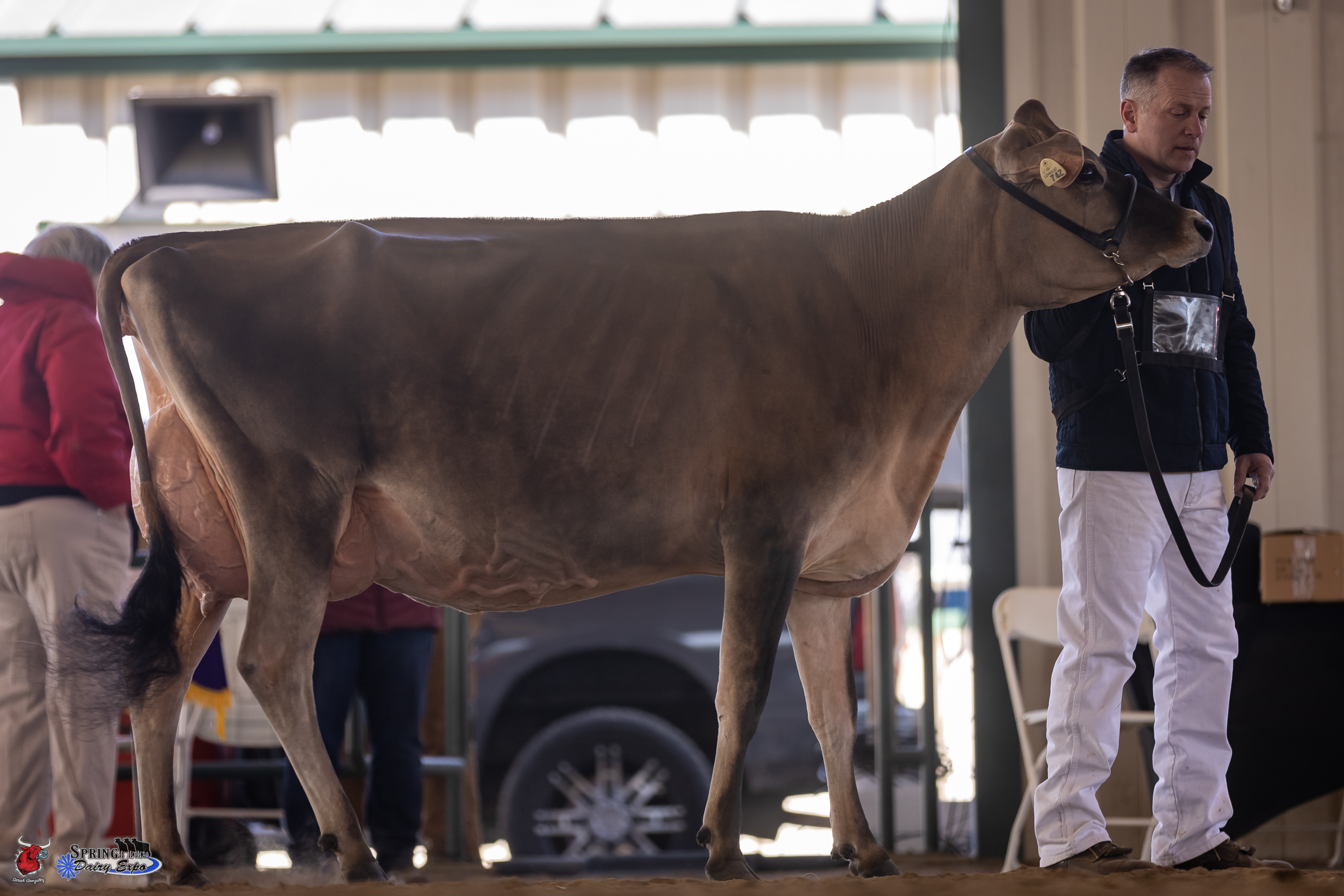 Spring Dairy Expo Jersey Show 2021