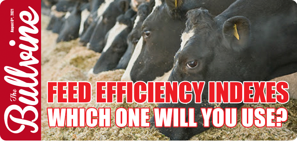 Feed Efficiency Indexes – Which One Will You Use?