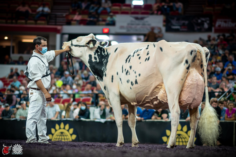 International Holstein Show – World Dairy Expo 202…